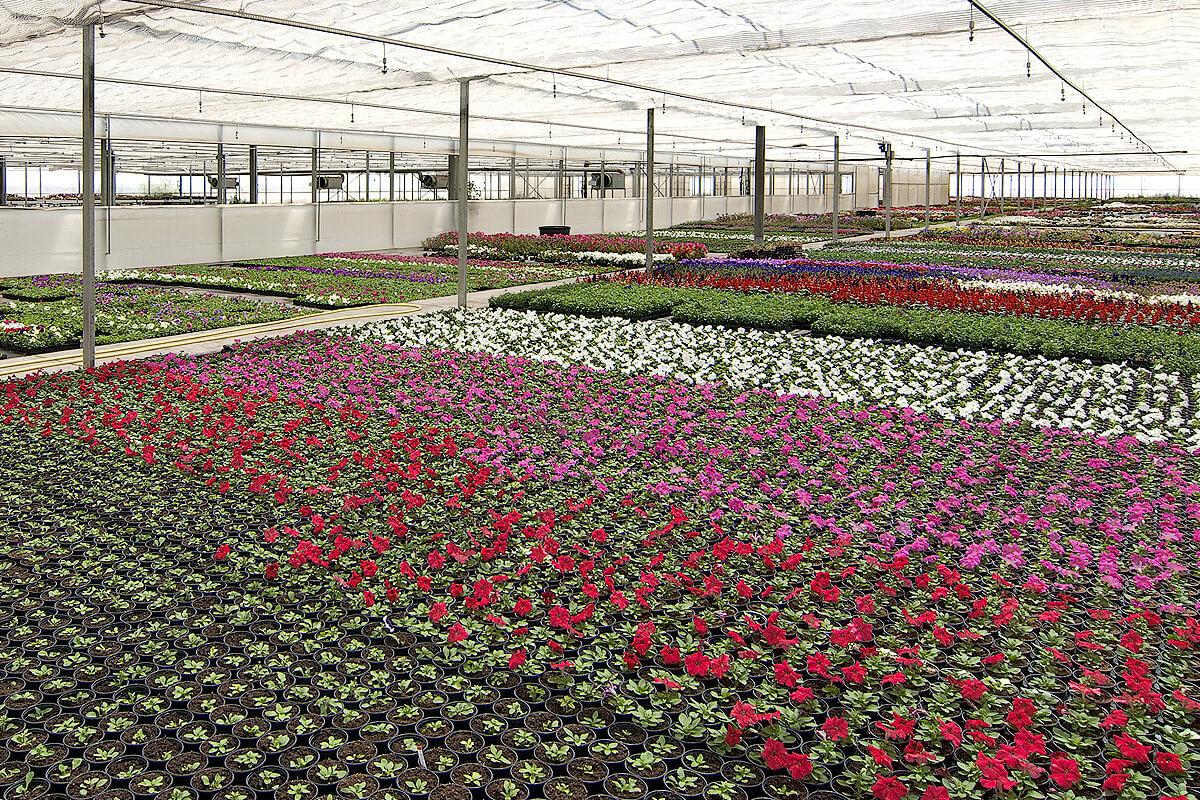 Invernadero para viveros multizona con control clim tico for Como realizar un vivero