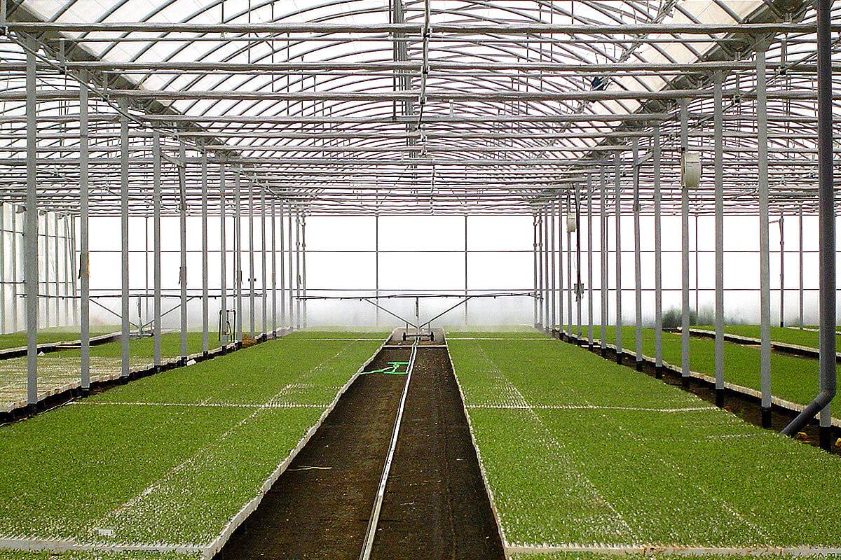 Invernadero para viveros multizona con control clim tico for Vivero e invernadero