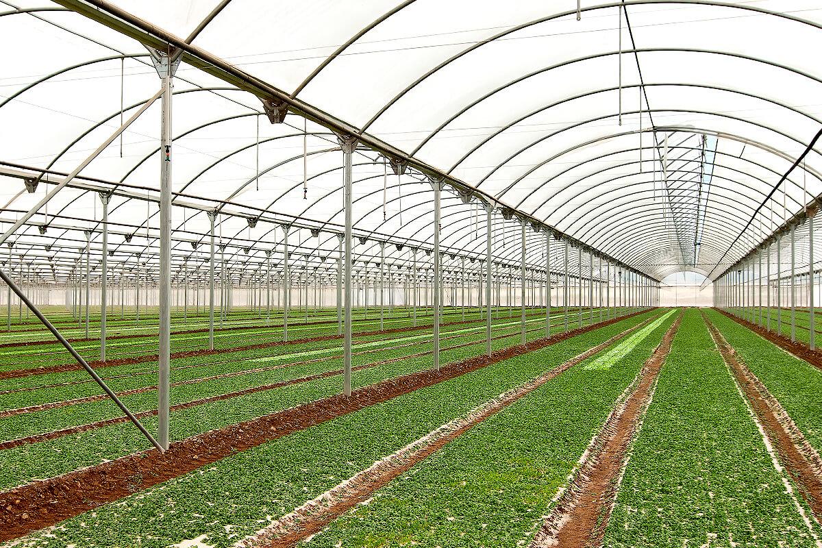 Invernadero curvo estructura adaptable modular y f cil for Vivero e invernadero
