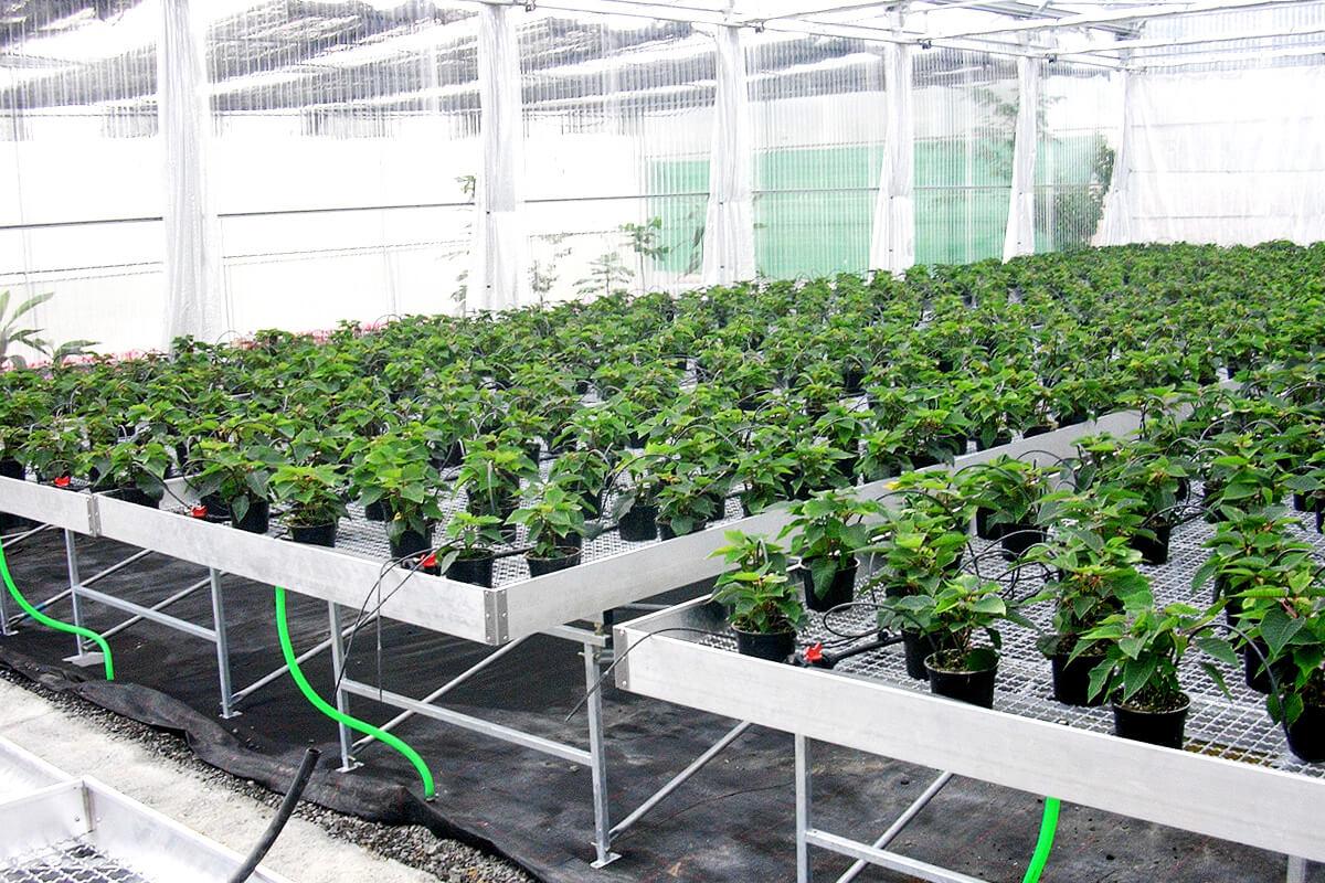 Mesas de cultivo para invernaderos for Construir mesa de cultivo
