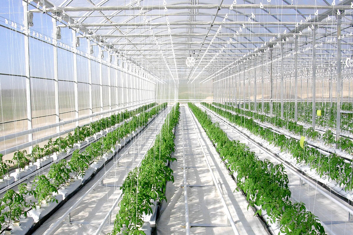 Water heating for greenhouses