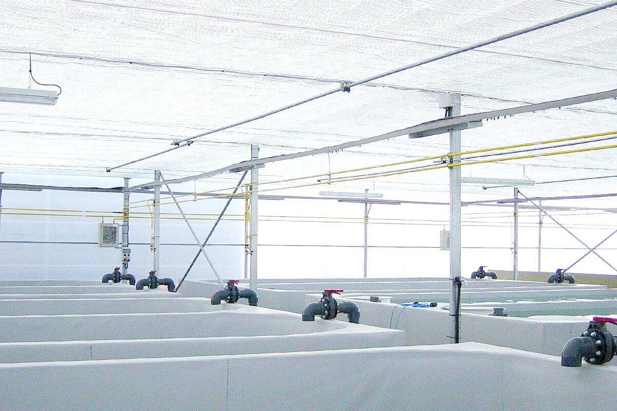 Invernaderos para acuicultura - Adaptados a la acuicultura