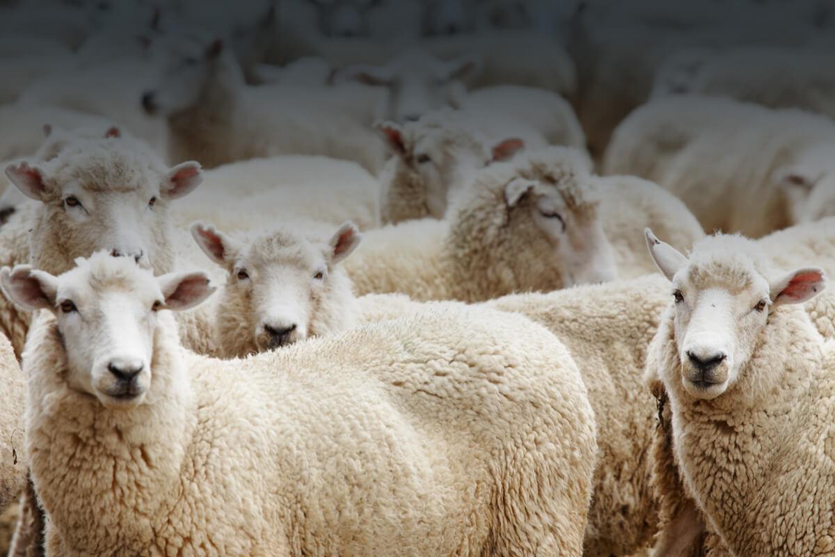 данном смотреть картинки про животноводство это