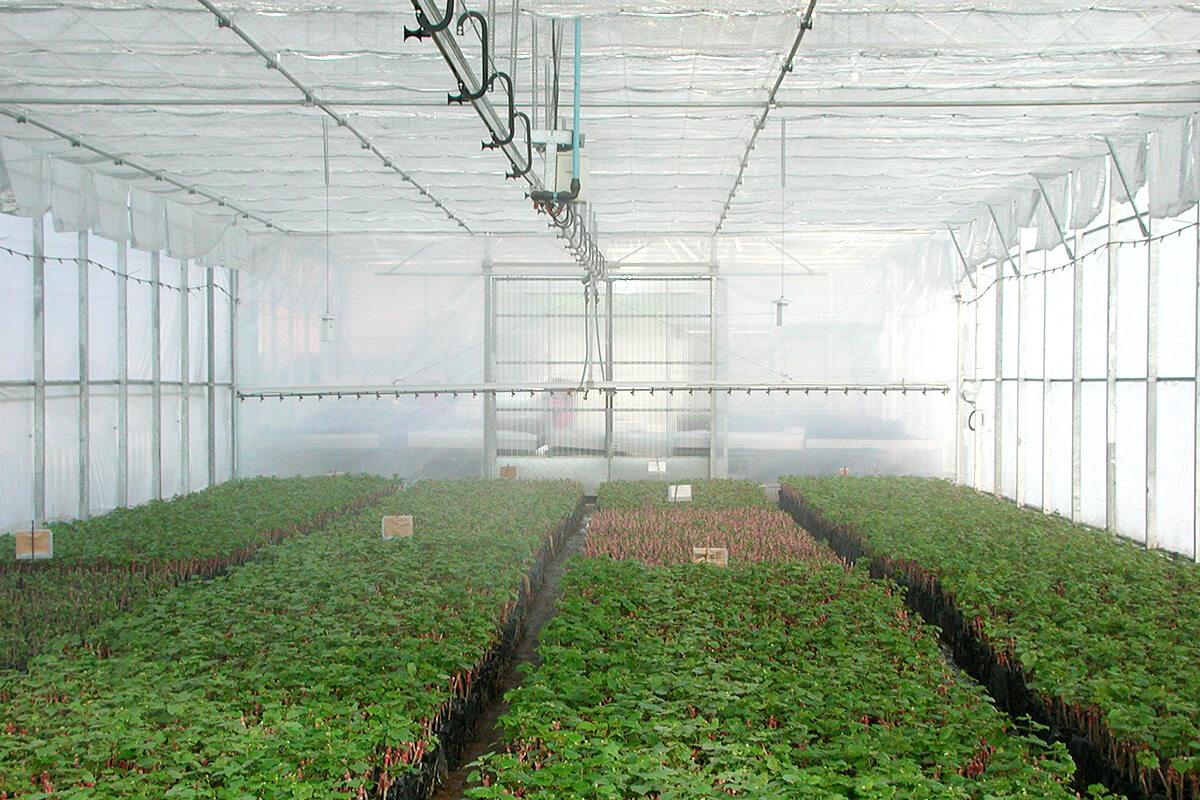Fertirriego en invernaderos. Aplicación de agua y fertilizantes