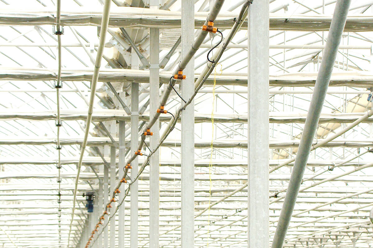 Fog system for greenhouses